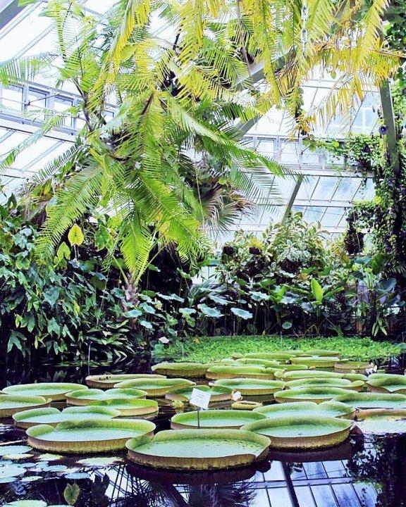 Botanical garden, Nieuwelaan, Meise